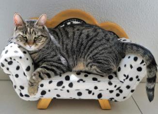 Pisica gri care sta pe o canapea în miniatură